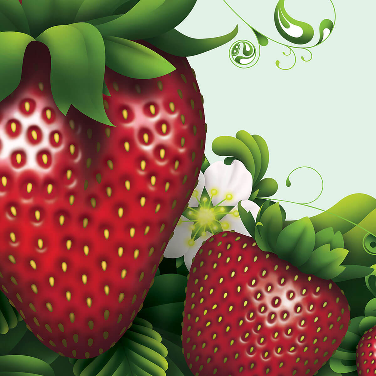 Fruition Branding & Packaging Hero Image