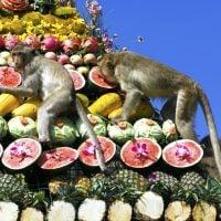 lopburi_monkey_banquet_gnomeandi-6